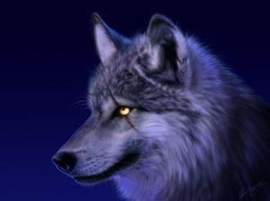 9_wolf